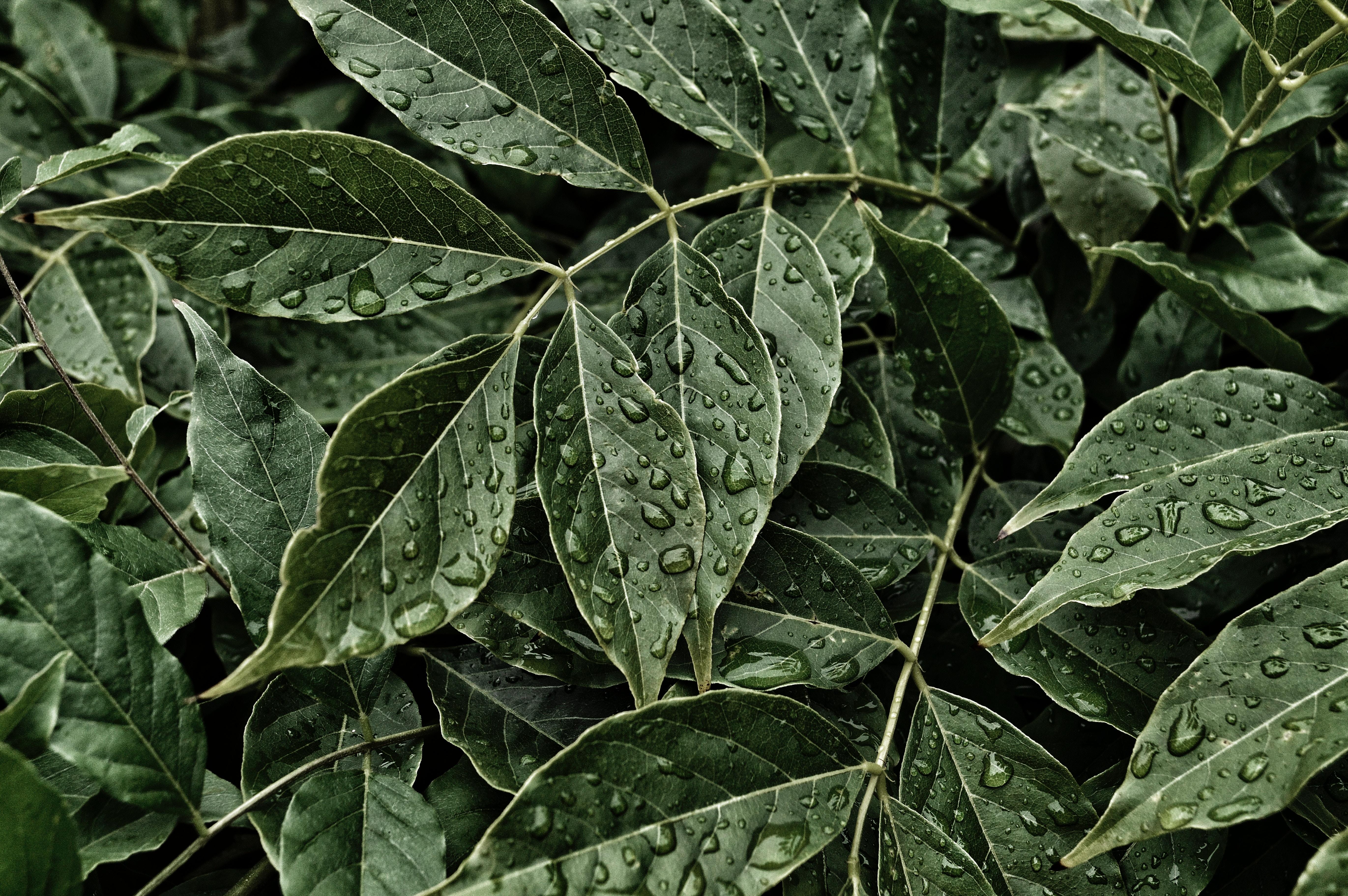 Hogyan tisztítsd meg a poros szobanövényeket?