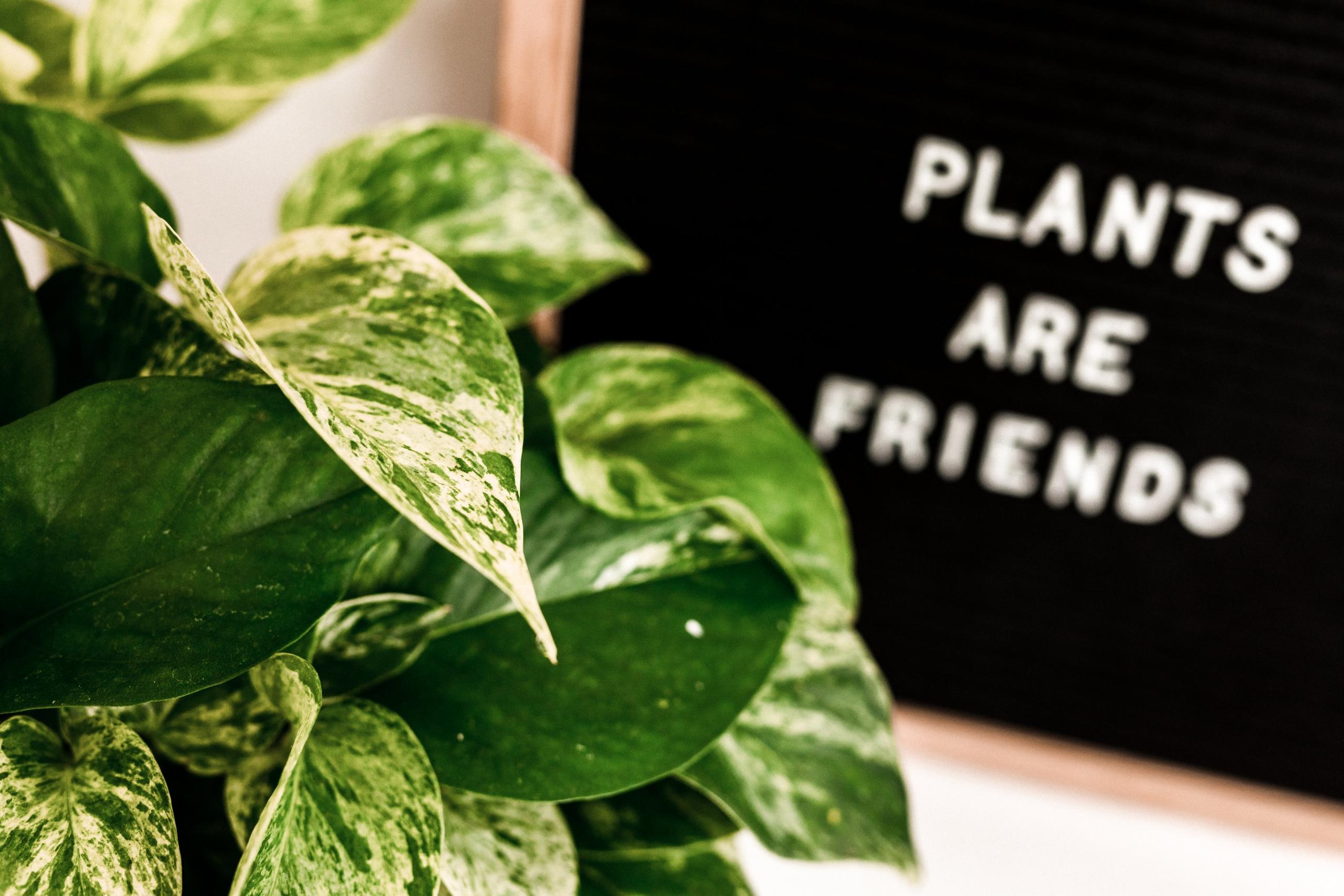 A nagy cserépválasztó – Így válassz új cserepet a szobanövényeidnek