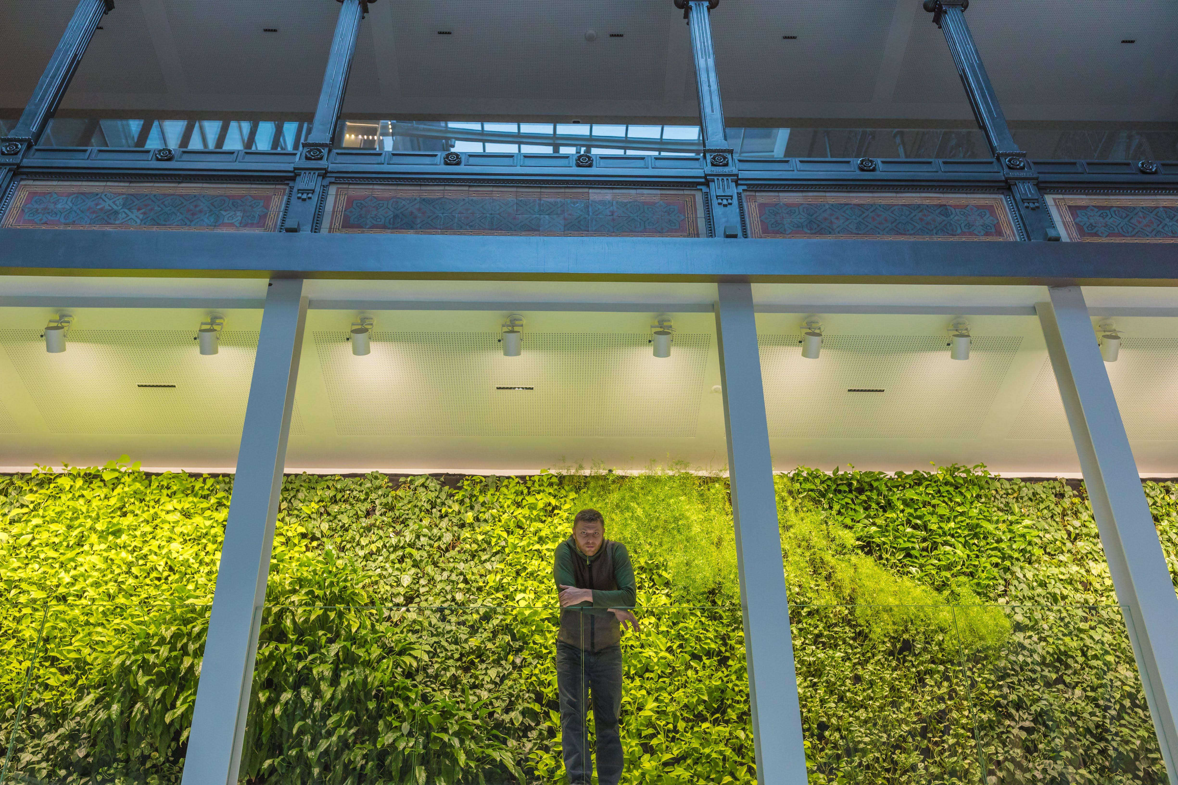 Iroda zöldítés mesterfokon, növényfallal – Grofie interjú