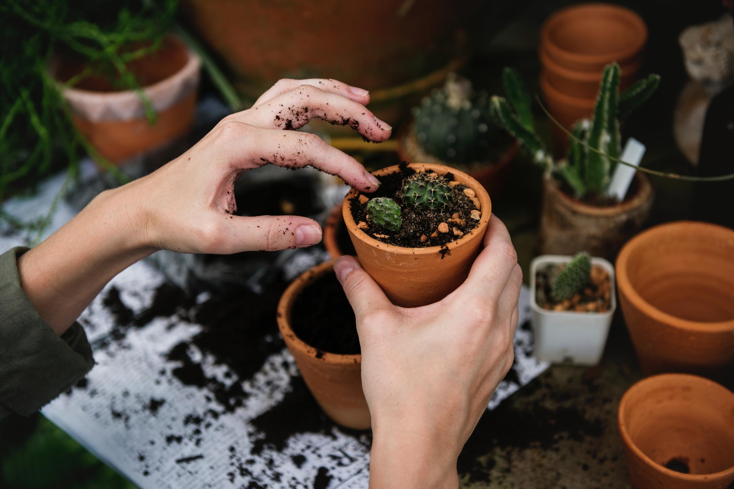 4 jel, ami arra utal, hogy át kell ültetned a szobanövényeidet