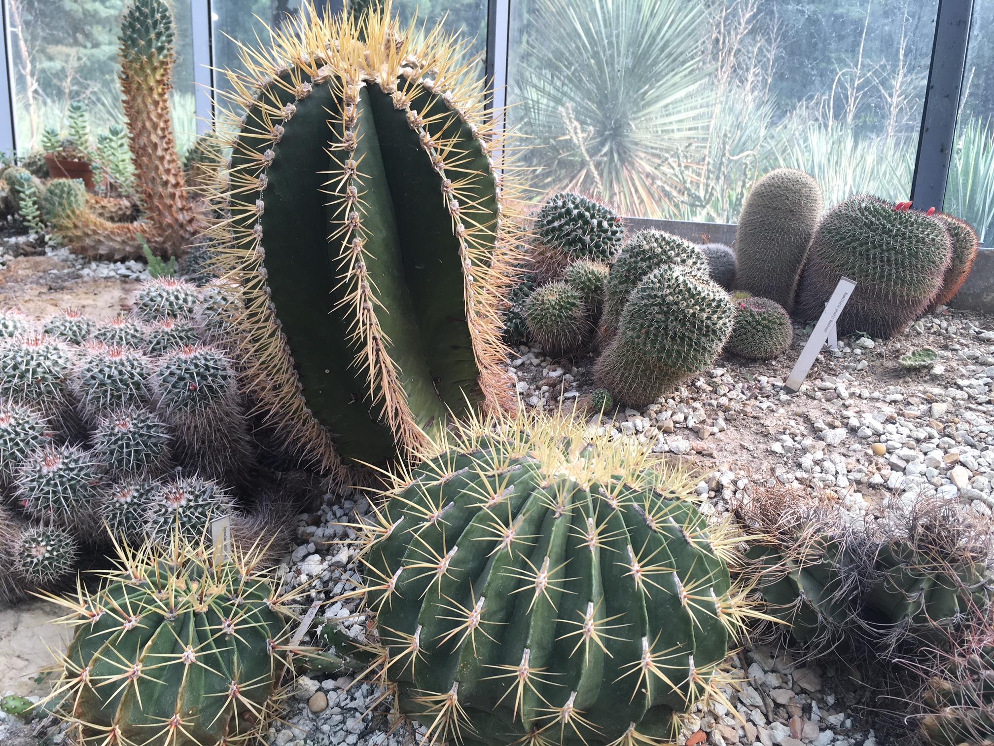 Így gondoskodj a kaktuszaidról