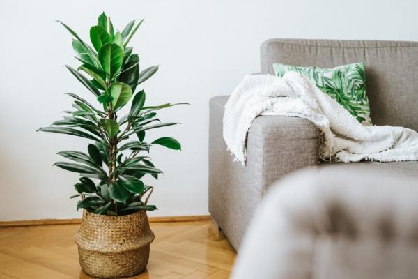 Növényrajongó vagy? Akkor ezek a mondatok tuti ismerősek lesznek