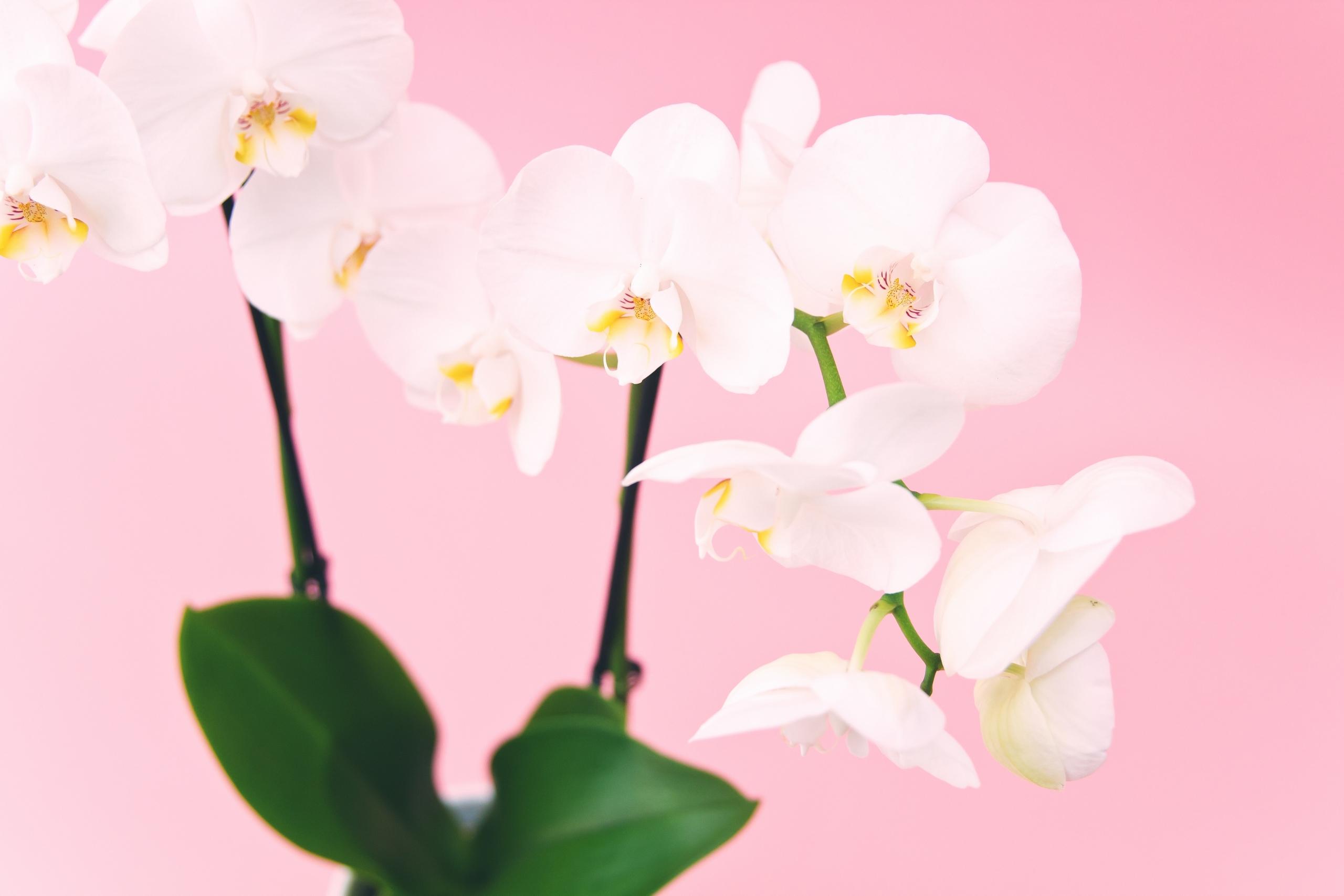 7+1 jó növényes program februárban