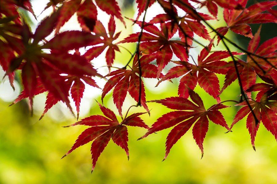 Szuper őszi növényes programok a Füvészkertben