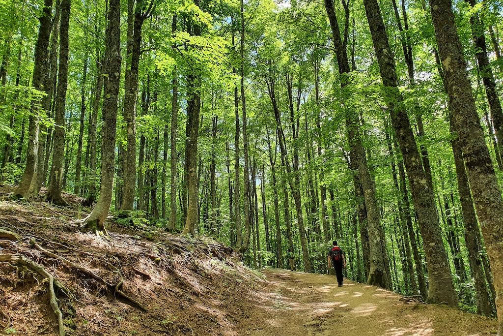 Amiről a fák suttognak – Elképesztően szép magyar természetfilm a Bükkről