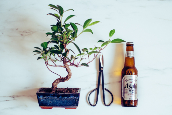 Így neveld a bonsaiodat
